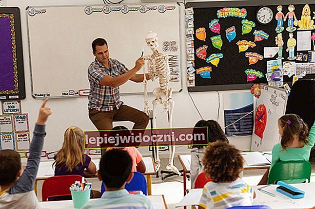 Poznaj budowę ludzkiego szkieletu i jego funkcje