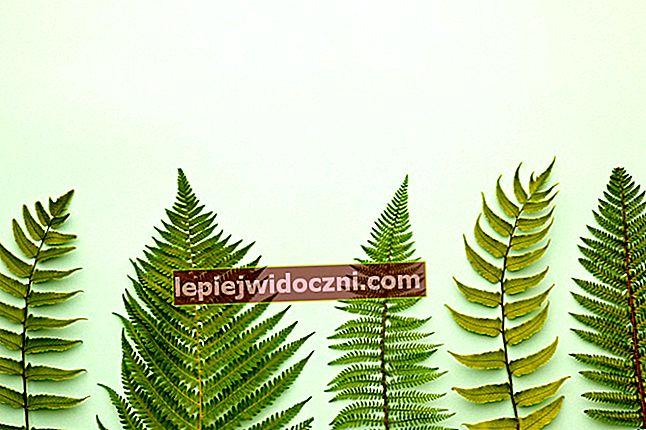 Poznaj charakterystykę roślin paznokciowych (Pteridophyta)