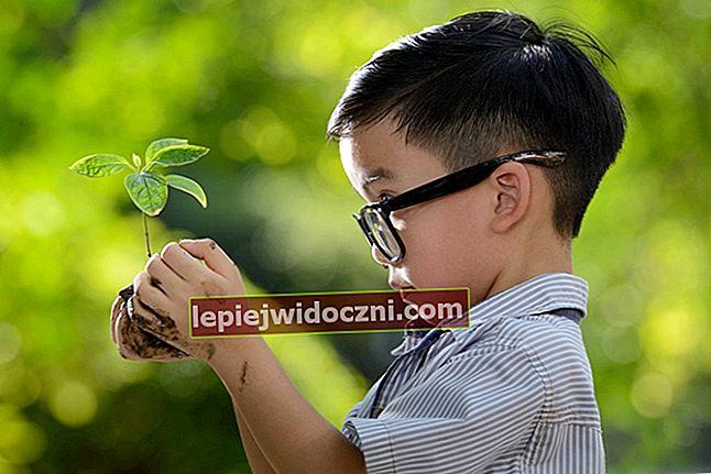 Struktura i funkcje roślin