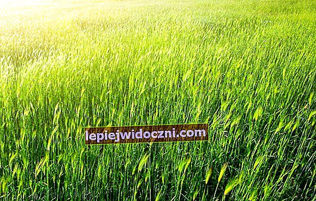 Różnica między trawą a krzewami
