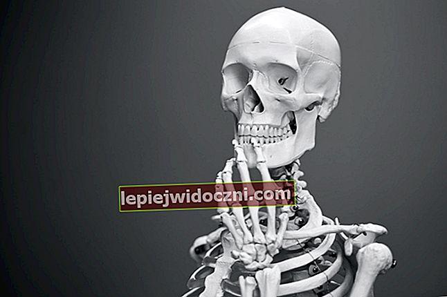 Czas poznać części ludzkich kości
