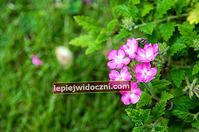 Dystrybucja flory i fauny na świecie