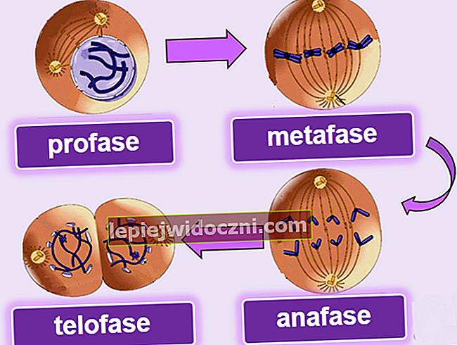 Podział komórek przez mitozę