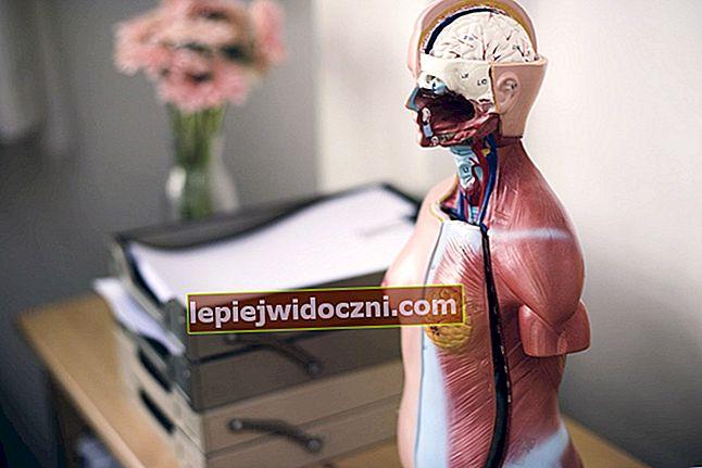 Układ wydalniczy u ludzi - jakie narządy pełnią?